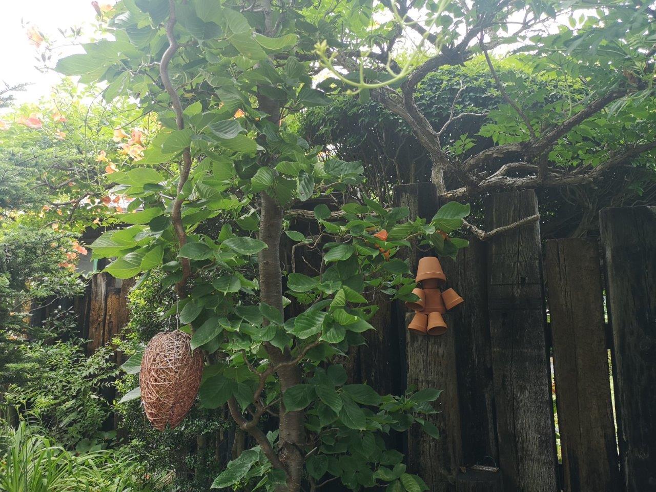 素敵屋さんの庭